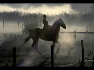bruno_aveillan_bmw_7series_horse
